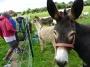Des ânes, des biquettes...