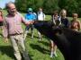 Au beau milieu des vaches paisibles