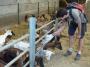 La visite de la ferme